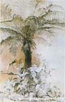 Древовидный папоротник. 1854